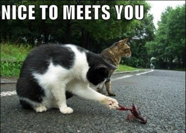 Funny Pictures With Captions Clean With Animals funny-animal-captions-002-013